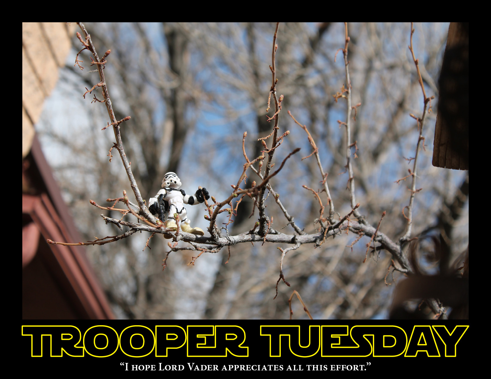 Sandy, the Sandtrooper stands out on a tree branch to get a better view.